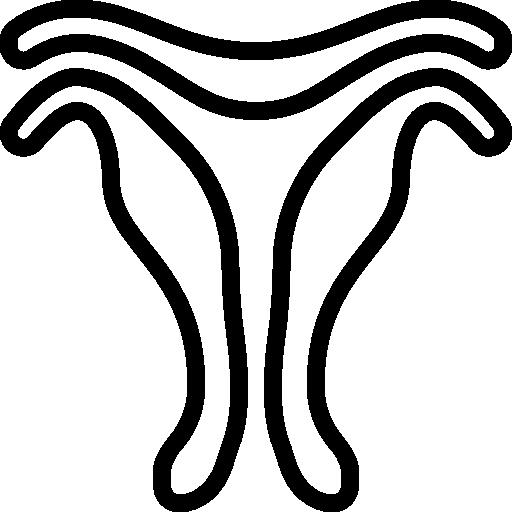 Beckenorganprolaps